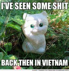 Veteran kitteh
