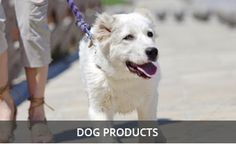 Dog Food Online, Dog Food Recipes, Puppies, Dogs, Animals, Cubs, Animales, Animaux, Pet Dogs