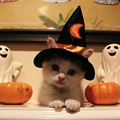 Halloween Cat | 50 Cute Cats Make Your Life Happier | Cutest Paw