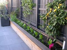 raised garden bed on a narrow side yard - good use of space for shade loving pla. - raised garden bed on a narrow side yard – good use of space for shade loving plants -