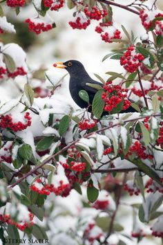 Different Aspects Of Nature Photography – PhotoTakes Pretty Birds, Love Birds, Beautiful Birds, Animals Beautiful, Cute Animals, Gray Garden, Winter Scenery, Tier Fotos, Winter Beauty