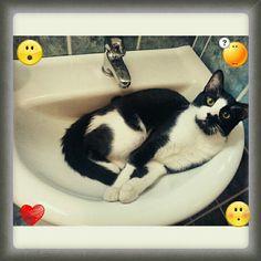 My lovely Cat Korsan