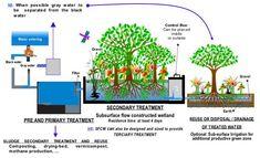 wetland wastewater treatment
