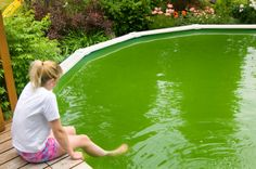 Treating swimming pool algae