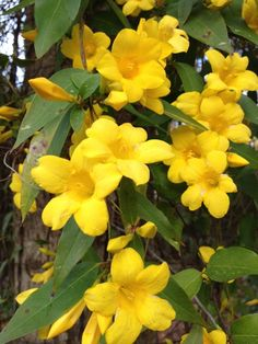 MARIETTE'S BACK TO BASICS: {Happy Yellow in Our Garden}