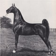 Jet Set was sired by Flight Time