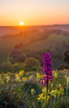 Butser Sunset HDR on 500px by Lewis Watt, England ☀ Canon EOS 7D-f/7.1-1/1250s-40mm-iso400, 3142✱4877px-rating:94.8 ◉ Photo location: Google Maps