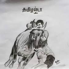 Image result for tamilnadu jallikattu sketches