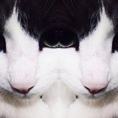 #cats #grunge #aesthetic #dark #gato #mirror