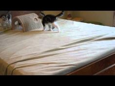 ARGH THE KITTEH CUTENESS... Two Little Monkeys Jumping on the Bed
