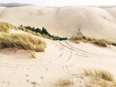 The dunes by the ocean