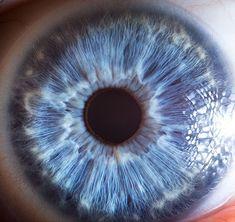 Extreme close-ups of human eyes by Suren Manvelyan / dandelion fluff