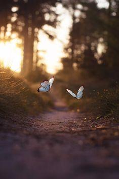 It's a beautiful world — lsleofskye: Golden light
