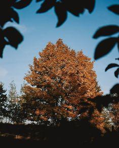 SARAH   Photographer (@fotografierende) • Instagram-Fotos und -Videos Enjoy It, Instagram Accounts, Dandelion, Clouds, Videos, Flowers, Plants, Pictures, Photography