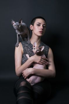 chat sphynx Marie Ployart
