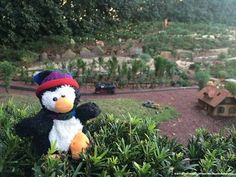 Pingo backstage and unauthorized at Disney World Epcot - Teddy & Friends: Perfect travel buddies Epcot, Backstage, Teddy Bear, World, Disney, Travel, Animals, Viajes, Animales