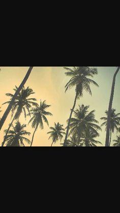 Tumblr Palm Trees