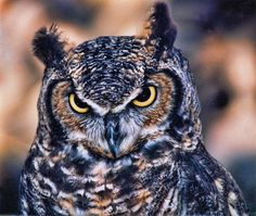 Owl Photograph by Helaine Cummins