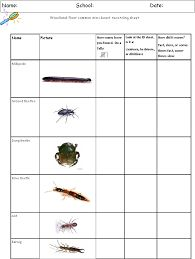 Image result for minibeast hunt recording sheet