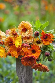 Fall colors.  love