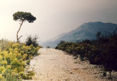 Weg zum Strand, Patara - Foto: S. Hopp