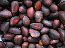 Sibirische Zirbelkiefer; die Samen (Nüsse) sollen Kraft verleihen, aber nur die der Sibirischen Pinus sibirica; So gelesen im 1. Band von Anastasia