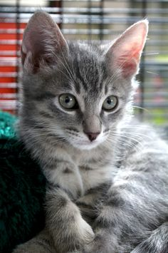 "I'm pretty sure my name is, ""Oh you're adorable"" because people say that a lot around me. #kitten"