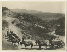 "Photograph of a pack of mules hauling bags of cement for construction of the Los Angeles Aqueduct. Caption on reverse reads ""hauling cement to mixer north end Deadman syphen [sic]."" Catherine Mulholland Collection. Water Works - Documenting Water History in Los Angeles."