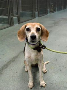 """SAFE!!! - """"MAGGIE"""" -TO BE DESTROYED TODAY  - SAT. - 10/15/16 - AVAILABLE AT BROOKLYN ACC. #A1093007."""