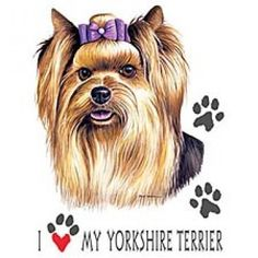 88 Best Yorkie Lve Images On Pinterest Yorkie Yorkies And Yorkshire