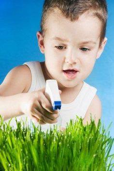 Rumput Gandum Sarana Pendidikan Anak