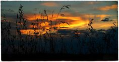 Prairie sunset. Easter Island, Photo A Day, Cool Guitar, Pet Store, Nature Photos, Yellow Flowers, Sunset, Landscape, Photography