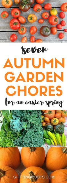 Fall is here and it's time to clean up your garden.  I'm sharing the seven Autumn garden chores I do to make things easier in the spring.  Divide perennial flowers, harvest vegetables, and prepare your soil for your best garden yet next year.
