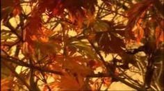 The Four Seasons - Autumn, Vivaldi
