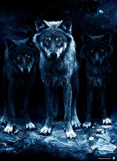 Ron & twins, Shadow & Phantom: Part of Western Clan, Fire pack, siblings, Other sibling is Spring