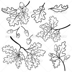 Oak Branches with Acorns, Outline  #GraphicRiver         Set oak branches with leaves and acorns, black contour on white background.  	 Vector EPS 8 plus AI CS 5 plus high-quality Jpeg. Editable vector file, containing only vector shapes. No gradients. No transparencies.     Created: 21August13 GraphicsFilesIncluded: JPGImage #VectorEPS #AIIllustrator Layered: No MinimumAdobeCSVersion: CS5 Tags: acorn #black #botany #branch #contour #drawing #environment #fashion #flora #foliage #forest…