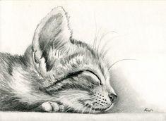 sleeping Kitten by art-it-art.deviantart.com on @deviantART...Graphit, Bleistift Zeichnung auf 200 Gramm Künstlerpapier ...Tiger Kitten ...original Pencil drawing ...Format: 18 x 25 cm - 7 x 10 inches: