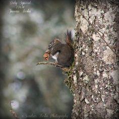 Sandra's Alaska Photography|Baby Squirrel-Juneau Alaska 2.24.12-(Click for more...)