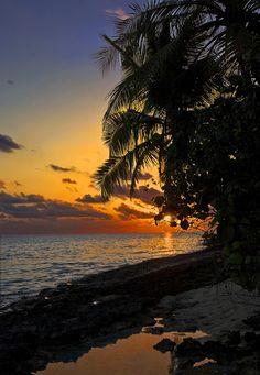 beach, palm tree silhouette