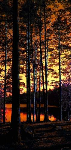 Dusk in the Forest - Explore the World with Travel Nerd Nici, one Country at a Time. http://travelnerdnici.com