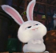Cute Photos, Cute Pictures, Snowball Rabbit, Cute Bunny Cartoon, Rabbit Wallpaper, Disney Phone Wallpaper, Secret Life Of Pets, Cute Memes, Cute Cartoon Wallpapers