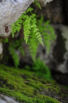 FERN & IVY'S WOODLAND COTTAGE -Moss and Ferns