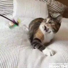 OMG It Flies