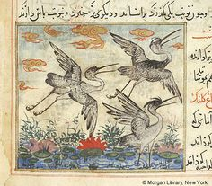 Bestiary, MS M.500 fol. 66v - Images from Medieval and Renaissance Manuscripts - The Morgan Library & Museum