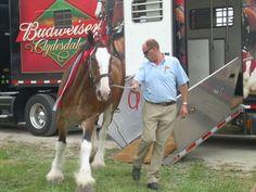Pretty horse :)