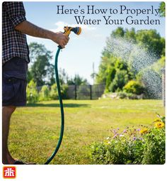 Here's How to properly water your garden to create a lush and beautiful yard.