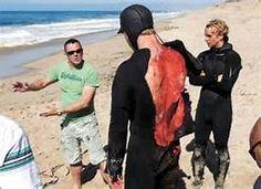 Tiger Shark Attack Victims - Bing images