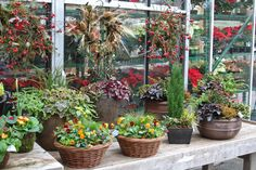 A selection of Swansons fall & winter containers.