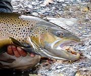 Delaware River, West Branch, New York Fly Fishing Reports & Conditions