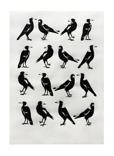"""a group of Magpies is called a Tiding of Magpies, also several other names including a """"Murder"""" as they are also corvidae (like crows) Magpie Tattoo, What Is A Bird, Cut Animals, Jackdaw, Australian Animals, Bird Drawings, Wildlife Art, Bird Art, Beautiful Birds"""
